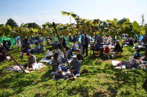 葡萄畑の写真