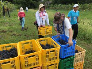 収穫カゴの運搬